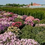 Der Gartenbau baut auf Präsentation mit Drohnenflug